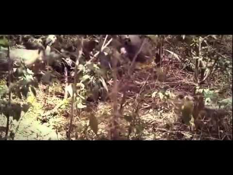Rio de Monstruos - El Congo: Documentales Completos En Español