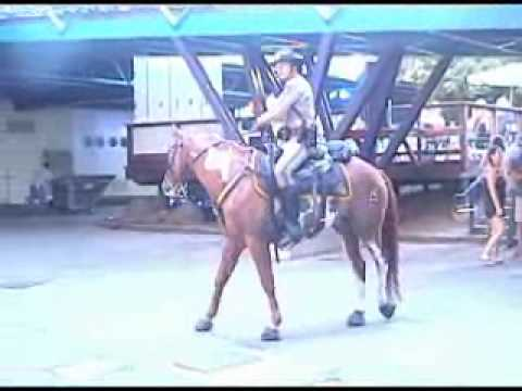 Dancing police horse riden by Lloyd Douglas