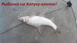 Рыбалка на Хапугу хлопок, зимой. Зимняя рыбалка на Амуре.