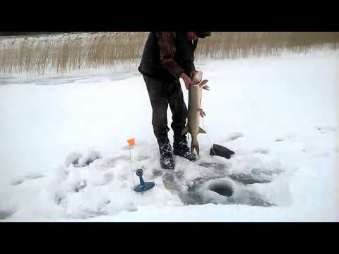 рыбалка в хмао на жерлицы