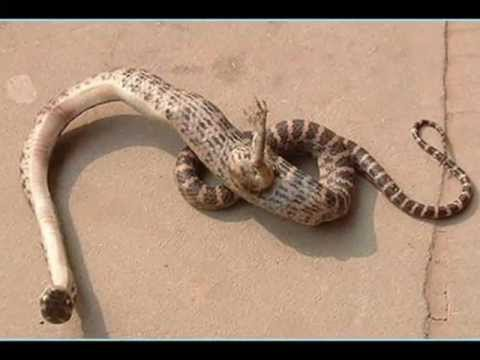 - Snake with a leg  (Real Images) -