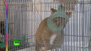 В Санкт-Петербурге раздают эрмитажных котов «в сапогах»
