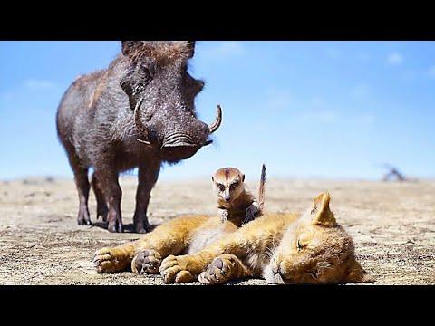 Download The Lion King - Timon And Pumbaa Saves Simba Hindi Dubbed Scene
