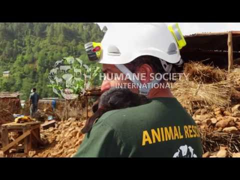 HSI Brings Much-Needed Help to Animals in Nepal