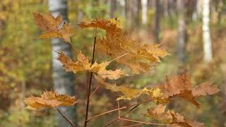 Латвия Осенние пейзажи