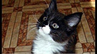 Взяли маленького котенка, а через год он превратился в «комнатного льва»