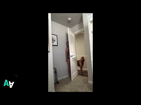 Funny Dog Plays Hide and Seek with his Dogsitter