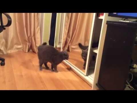 Кот видит отражение в зеркале