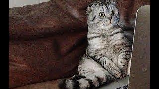 Кот в шоке  #коты #кошки #cats