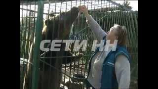 Приют для животных, вышедших из цирка на пенсию, организовали в Городецком районе