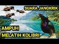 Suara Jangkrik Melatih Konin Kolibri Ninja Agar Cepat Gacor Buka Isian  Mp3 - Mp4 Download