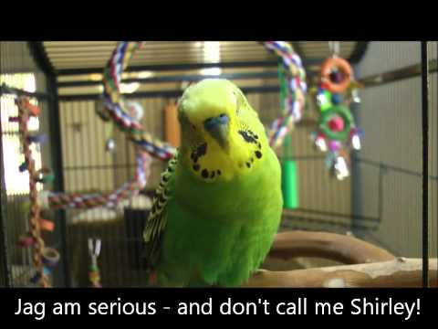 You Sank My Baby Bird!