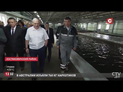 Лукашенко: Будет кіслаццё, як у народзе кажуць! Визит Президента в Костюковичи