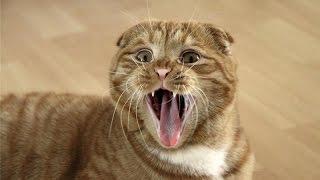 СТРАШНЫЕ КОТЫ  #опасный кот