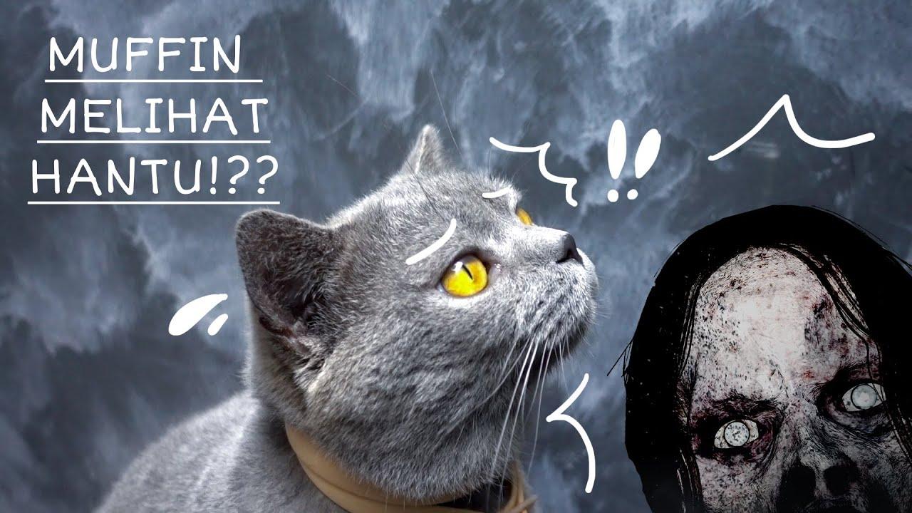 Kucing Bisa Melihat Hantu? Masa Sih? - Cia Cat Diary