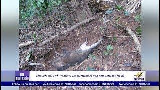 Các loài thực vật và động vật hoang dã ở Việt Nam đang bị tận diệt