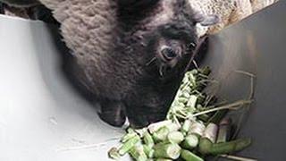 http://dd.hokkaido-np.co.jp/cont/video/?c=news&v=879459808002 農業...
