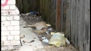 В Новозыбкове изувеченный труп собаки некому убрать