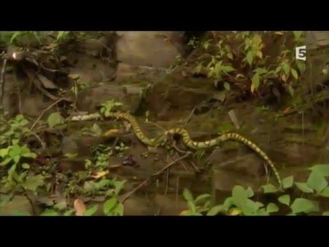 Chine sauvage : à travers le Yunnan