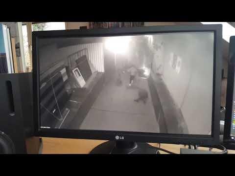 Die ganz genaue Untersuchung des Magnitz-Videos