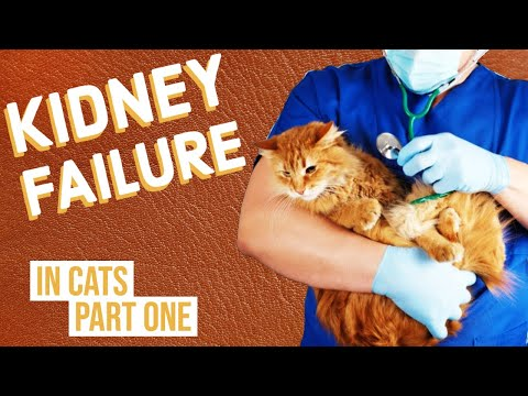 Kidney Failure In Cats Part 1