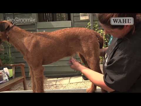 Grooming Guide - Irish Terrier - Handstripped - Pro Groomer