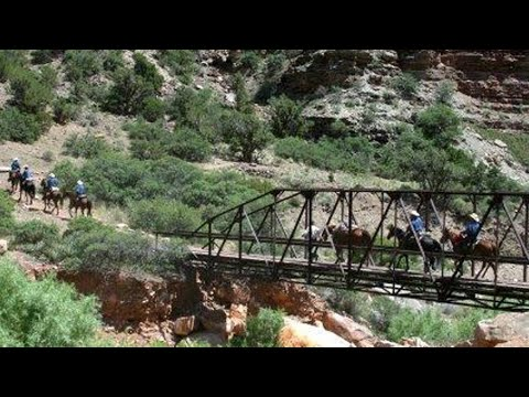 Grand-Canyon - Trail Of No Return – mit Missouri Foxtrotter