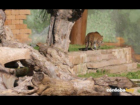 Portos, el nuevo habitante del zoo cordobés