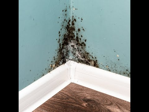 *-asbestos-removal-in-ottawa-|-asbestos-abatement---(613)699-2763