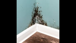 ASBESTOS REMOVAL 20% OFF OTTAWA 699-2763 ABATEMENT