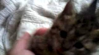 Our new kitteh... Kiki! Thumbnail