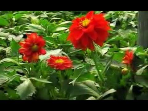 Jakie Rośliny Sadzimy Wiosną Rośliny Cebulowe Bulwiaste Kłączowe