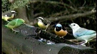 Aves del Junko, Venezuela