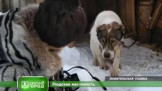 Живодёры Усть-Илимска поразили своей жестокостью!