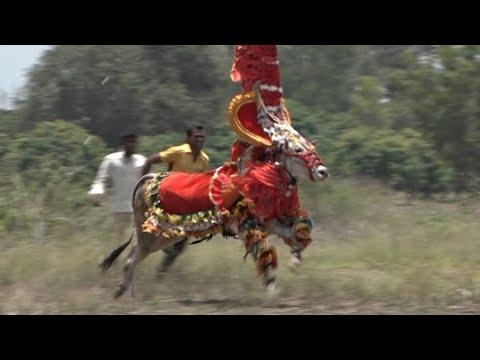 Famous Bulls running Compilation ! Hori Habba Jallikattu