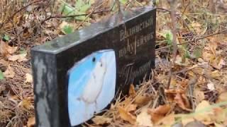 В Ярославле нашли нелегальное кладбище домашних животных