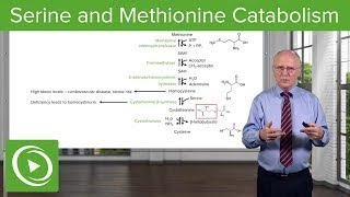 Serine Family and Methionine Catabolism – Biochemistry | Lecturio