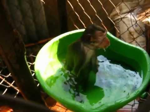 Xiếc Độc đáo xem khỉ biểu diển xiếc dưới nước.AVI
