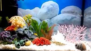 Псевдо Морской аквариум с цихлидами. заселяем рыб, строим декорации