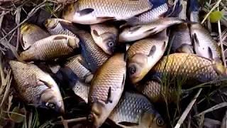 Ловля карася на удочку, Catching carp for bait(Ловля карася на удочку. Catching carp for bait. Вы увидите увлекательную ловлю карася я вам расскажу о месте ловли..., 2016-08-25T09:39:41.000Z)
