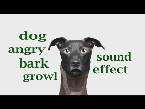 Dog Barking Sound Effect Mp
