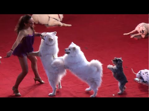 Circus. The show dogs. Цирк. Смотреть Шоу собак.