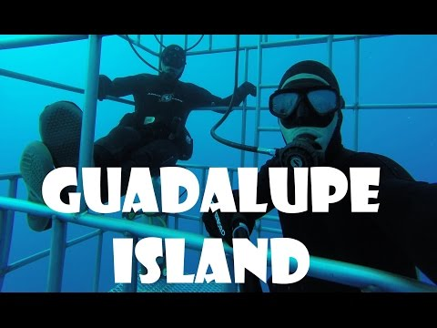 SHARK ADVENTURE : from FRANCE to GUADALUPE ISLAND !