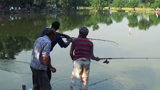 Unbidden Rohu Fishing Videos By Fish Watching