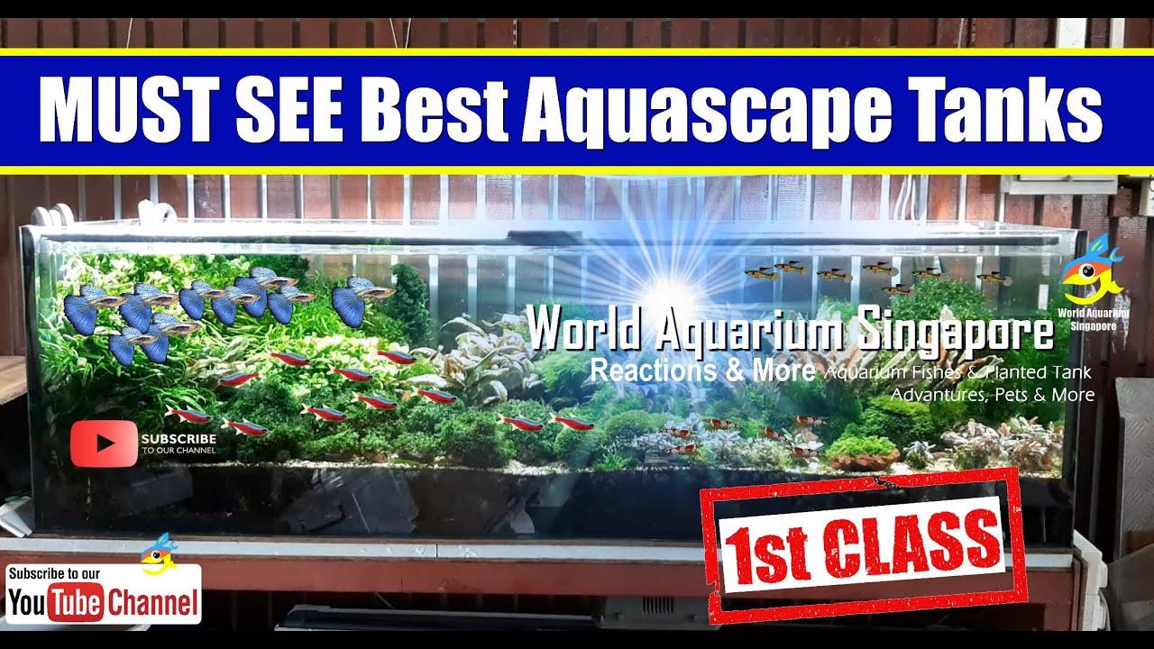 Best Must See Big Aquascape Aquarium Tanks 6feet To 7feet Youtube