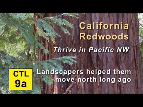 CTL 9A - California Redwoods Thrive in Pacific NW (Intro & Hutt Park)