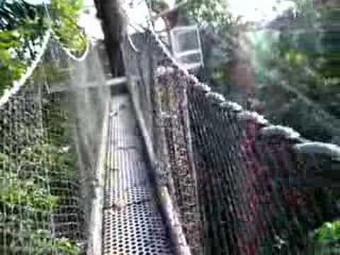 iwokrama canopy walkway guyana & iwokrama canopy walkway guyana - YouTube