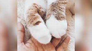 Măng cụt - Vú khí của loài mèo khiến bạn phải siêu lòng khi xem chúng