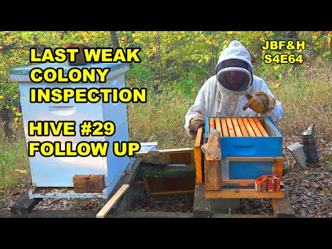 Hive 29 Follow Up S4E64 #beekeeping