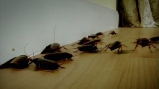 Sitting On Roaches | Infested!